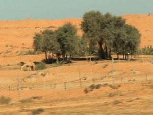 Unterwegs in den emiraten, hier zwischen Ras-Al-Khaimah und Dubai. (Foto: Sören Peters)