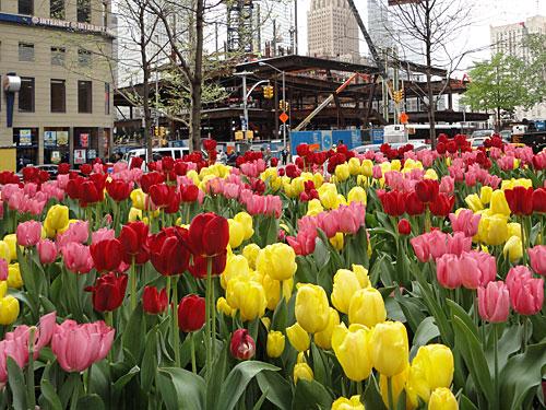 """Nur einen Steinwurf entfernt befindet sich Ground Zero. Hier eine Aufnahme aus dem April 2010. Hinter einem Tulpenbeet ist die Baustelle für den neuen """"Freedom Tower"""" zu sehen. (Foto: Sören Peters)"""