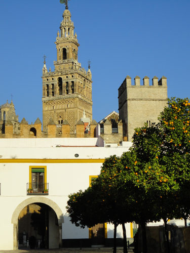 Typisch Sevilla: Ein Hinterhof mit Orangenbäumen und Blick auf die Giralda. (Foto: spe)