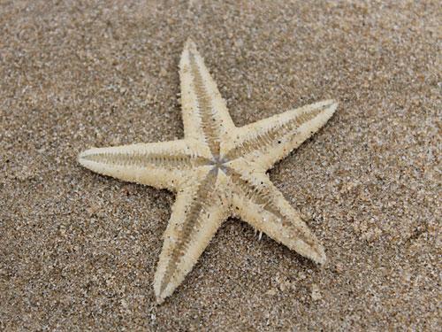 Was im Netz nichts zu suchen hat, landet am Strand. (Foto: spe)