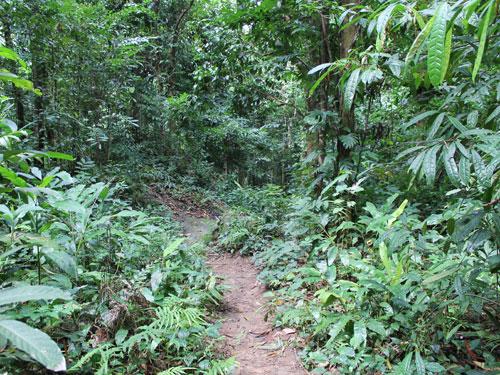 Die angefutterten Pfunde wird man bei einer Wanderung durch den Dschungel wieder los. (Foto: spe)