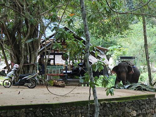 Wer die Insel nicht auf eigene Faust erkunden möchte, kann sich einer geführten Tour - inklusive Elefantenreiten und allerlei fragwürdiger Tiershows - anschließen. Die Kosten liegen bei rund 2.000 THB (ca. 50 Euro). Wir verzichteten bei unserem Besuch darauf. (Foto: spe)