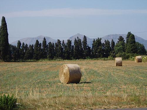 Strohballen in der Nähe von Pals. (Foto: spe)