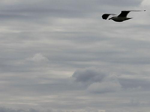 Langeoog, das ist auch Natur pur. Gut zu wissen: Eine Möwe... (Foto: Sören Peters)