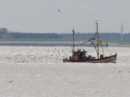 ...oder harte Arbeit auf dem Fischkutter. (Foto: Sören Peters)