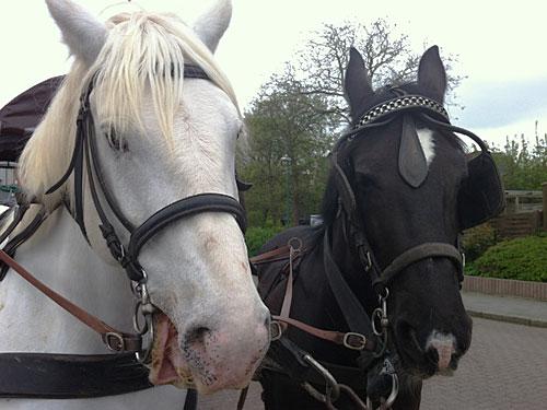 Den Pferden kann dies jedoch nichts anhaben. Gesehen am Bahnhof. (Foto: Sören Peters)