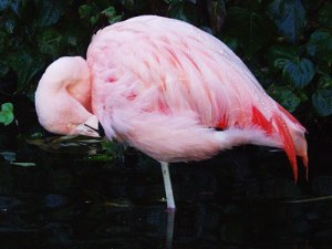 Ein Flamingo, mitten auf einem Dach in London. (Foto: spe)