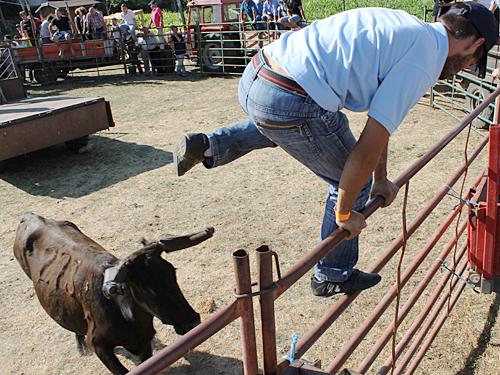Mit einem beherzten Sprung über die Absperrung rettet sich dieser Hobby-Toureiro vor dem heranbrausenden Stier. (Foto: spe)
