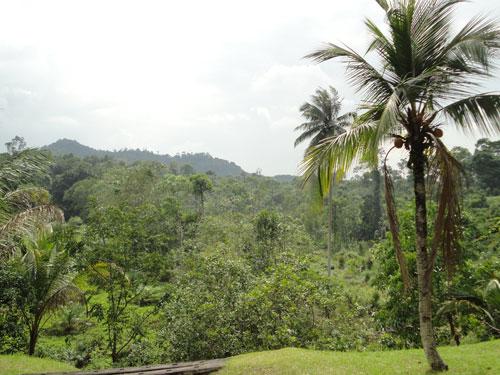 Blick über die grünen Hügel des Nationalparks. (Foto: Sören Peters)