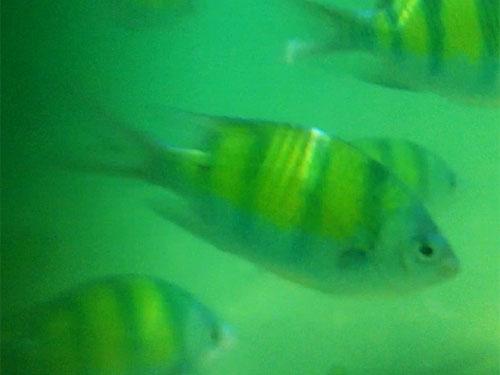 Umgeben von Fischen in der Maya Bay. (Foto: Sören Peters)