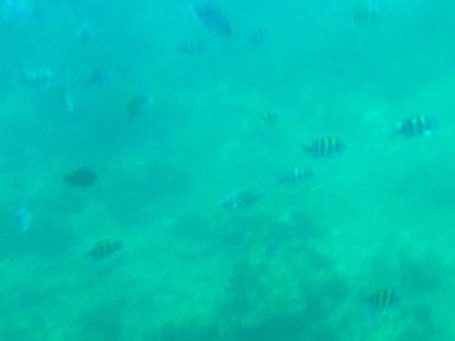 Eines der schönsten Thailand-Erlebnisse: Schnorcheln im kristallklaren Wasser. (Foto: Sören Peters)