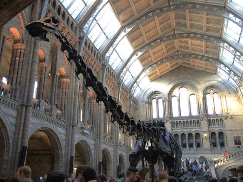 Lohnend ist auch ein Besuch im Natural History Museum. Eintritt – natürlich – frei! Schon allein der Architektur wegen ist ein Besuch beeindruckend. Gleich nebenan befinden sich das Science Museum und die Victoria&Albert Museum (V&A). Nicht nur für Regentage geeignet. (Foto: Sören Peters)
