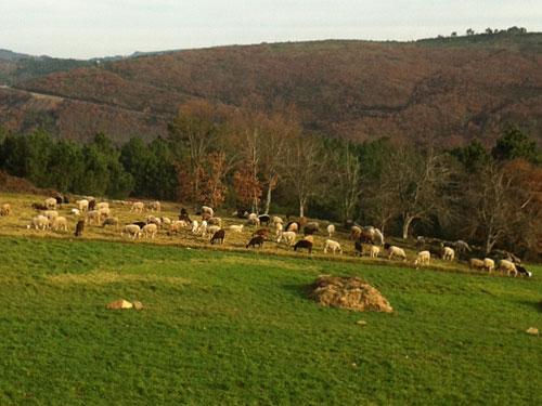 Schafe auf einer Weide bei Videmonte. (Foto: Sören Peters)