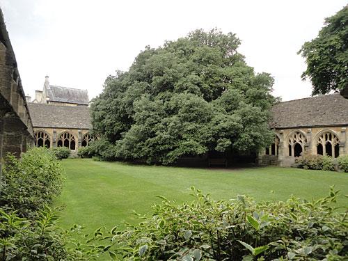 """Quadrangle des New College. Der Baum könnte Zauber-Fans bekannt vorkommen, hier wurde """"Harry Potter und der Feuerkelche"""" gedreht. (Foto: Sören Peters)"""