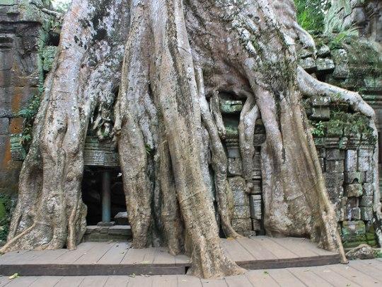 Anders als die übrigend Tempel wurde der Ta Prohm nicht restauriert... (Foto: Sören Peters)