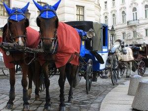 Fiaker vor der Hofburg. (Foto: Sören Peters)