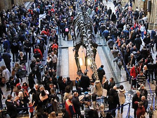Zusammenrücken, bitte! Besucher an einem ganz normalen Februar-Samstag im Natural History Museum. (Foto: Sören Peters)