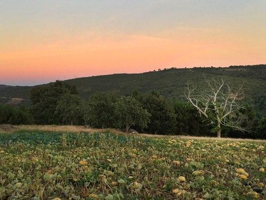 Ende gut, alles gut: Ab Montagnachmittag riss die Wolkendecke auf und machte den Abschied von Portugal umso schwerer. (Foto: Sören Peters)