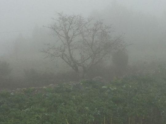 Von Guarda geht's nach Videmonte. Außerhalb der Stadt legt sich morgens bisweilen dichter Nebel über die Felder. (Foto: Sören Peters)