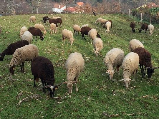 Immerhin: Die Schafe haben kein Problem mit der Kälte. (Foto: Sören Peters)